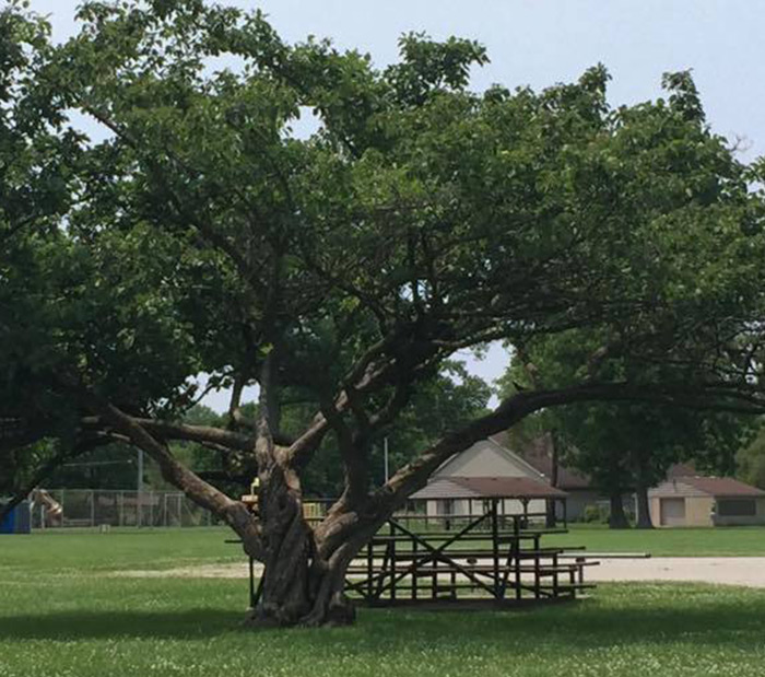 Parks Bleacher and Tree