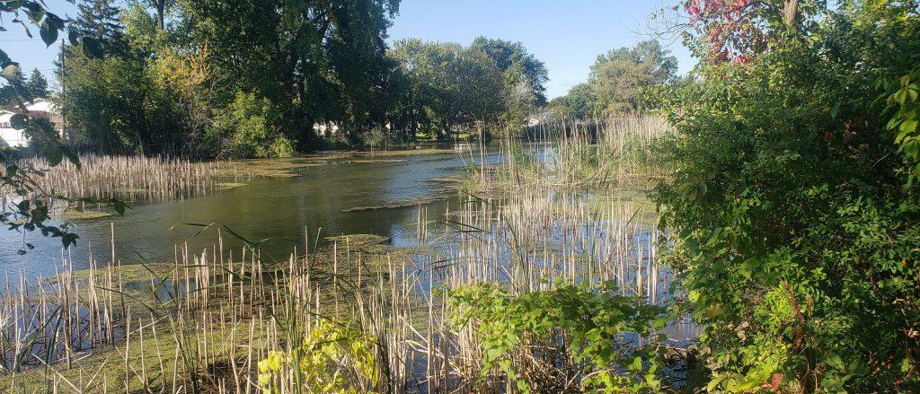 Washington Township Marsh area